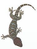 Gecko en Bangkok Foto de archivo