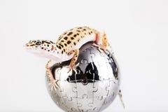 Gecko en globe images libres de droits