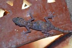 Gecko en una pared fotografía de archivo