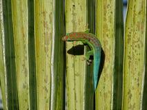 Gecko fleuri de jour à 270 degrés Image stock