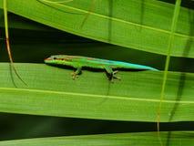 Gecko fleuri de jour photo stock