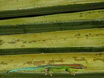 Gecko fleuri de jour - composition géométrique photo libre de droits