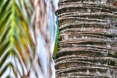Gecko fleuri de jour sur le tronc de palmier Photos stock