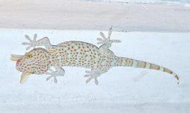 Gecko  Gekkonidae Stock Image