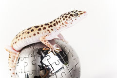 Gecko in globe Stock Photography