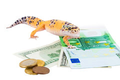 Gecko guard Stock Image