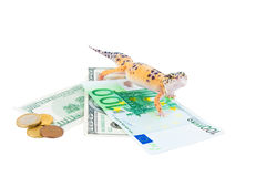 Gecko guard Royalty Free Stock Images