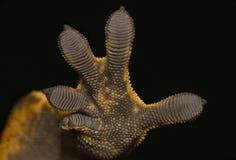 Gecko hand stock photos