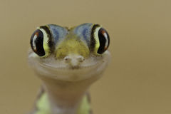Gecko heureux photo stock