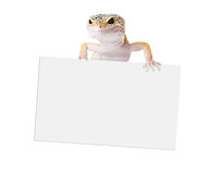 Gecko holding blank sign Royalty Free Stock Photos