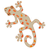 Gecko. An illustration of a gecko Royalty Free Stock Images