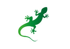 Gecko  illustration Stock Photo