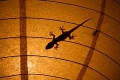 Gecko and insect silhouettes on a lamp shade Royalty Free Stock Photo