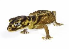 Gecko lisse de queue de bouton images libres de droits