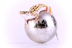 Gecko lizard Royalty Free Stock Photography