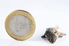 Gecko Lizard and Coin Royalty Free Stock Photos