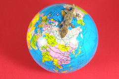 Gecko Lizard and Globe Stock Image