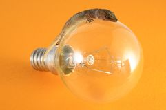 Gecko Lizard and Light Bulb Royalty Free Stock Photography