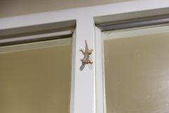 Gecko lizard on the window Stock Image
