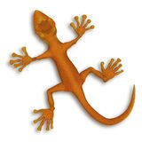 Gecko lizzard Royalty Free Stock Photography
