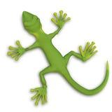 Gecko lizzard 3d Stock Photos