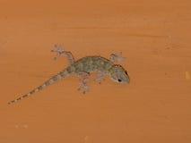 Gecko méditerranéen de maison sur le plafond la nuit image libre de droits