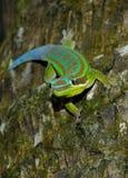 Gecko. Mauritius gecko on tree trunk Royalty Free Stock Image