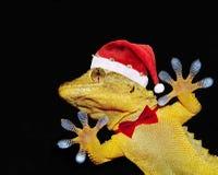 Gecko mit Weihnachtsmann-Hut und -Fliege, die jeder grüßt lizenzfreie stockfotografie