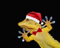 Gecko mit Weihnachtsmann-Hut und -Fliege, die jeder grüßt Lizenzfreies Stockbild