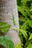 Gecko na árvore Imagens de Stock Royalty Free