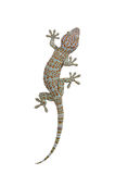Gecko no fundo branco Fotos de Stock Royalty Free