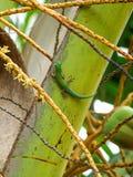 Gecko på en palmblad Royaltyfri Fotografi