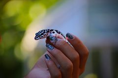 Gecko Portrait. Black & white spotted Gecko help by hand with nail art stock image