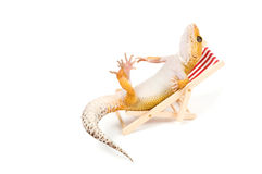 Gecko que relaxa na praia-cadeira Foto de Stock