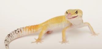 Gecko que se lame los labios fotos de archivo