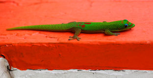 Gecko on Red Stock Photo