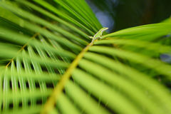 Gecko relaxing on green tropical leaf Stock Photo