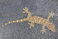 Gecko s'élevant sur le fond de mur de briques de ciment photos stock