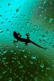 Gecko s'élevant sur le vitrail humide de Chambre photographie stock