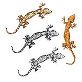 Gecko set. vector illustration