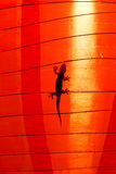Gecko Silhouette Stock Photo
