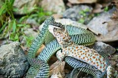 Gecko & Snake Stock Photos