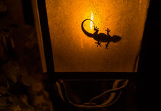 Gecko in streetlamp Stock Image