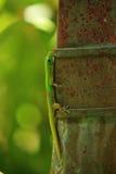 Gecko sulla parete Fotografia Stock