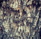 Gecko sur l'arbre images stock