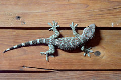 Gecko sur la pièce en bois de mur la nuit Images libres de droits