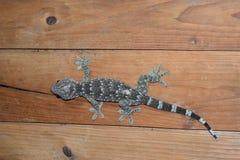 Gecko sur la pièce en bois de mur la nuit Images stock