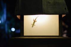 Gecko sur la silhouette d'ombre de lumière de lampe photo stock