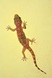 Gecko sur un mur photographie stock