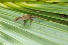 Gecko sur une lame photos libres de droits